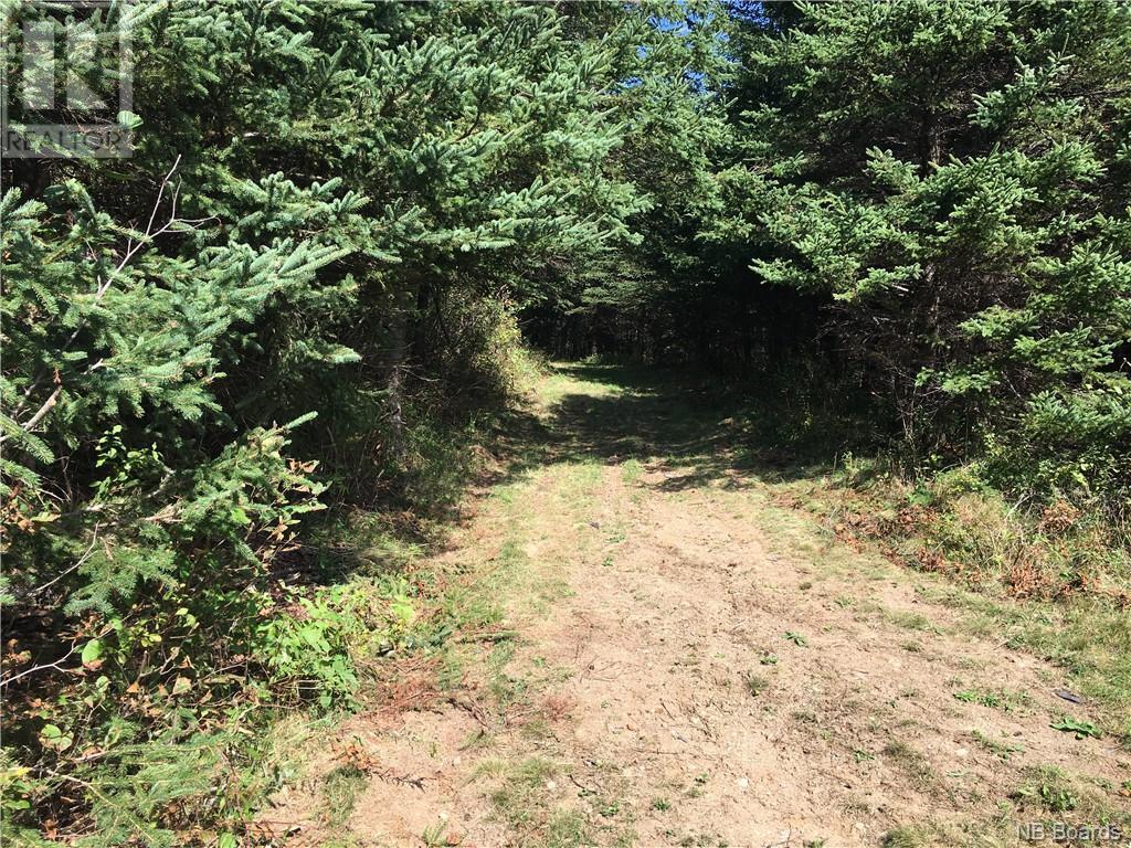 - Ashburn Road, Saint John, New Brunswick  E2K 5K7 - Photo 12 - NB064391