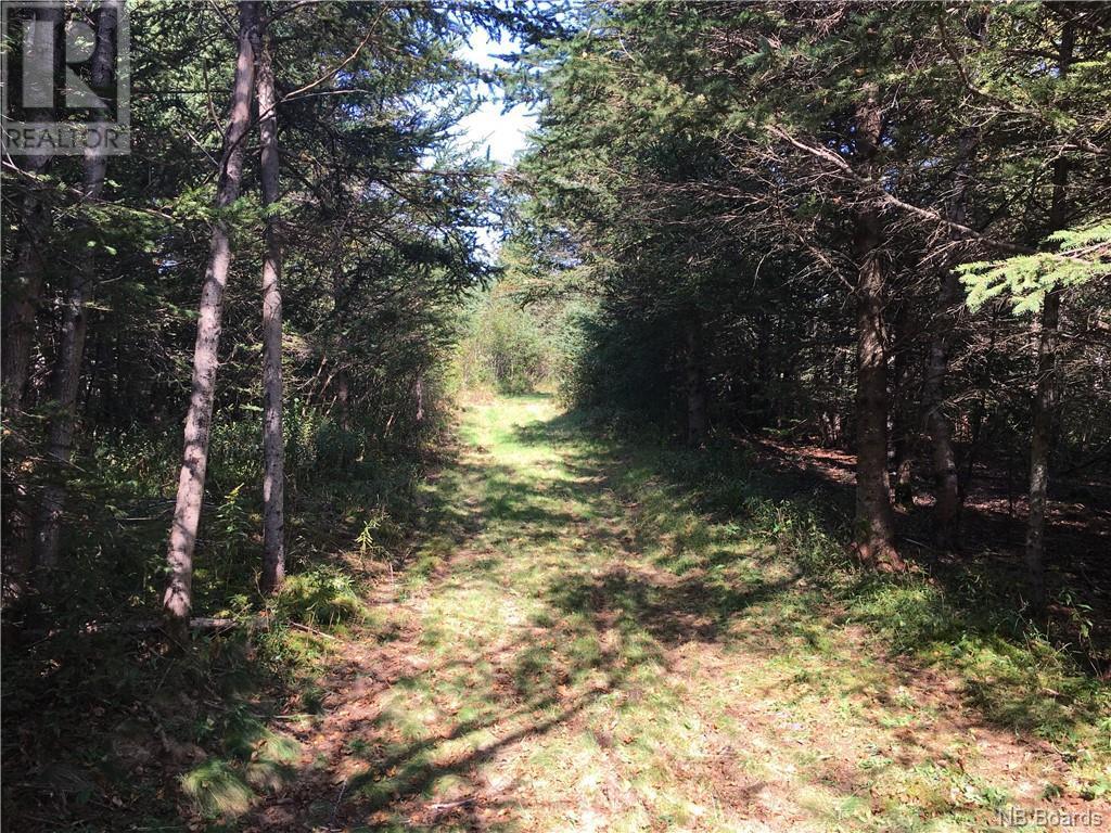 - Ashburn Road, Saint John, New Brunswick  E2K 5K7 - Photo 13 - NB064391