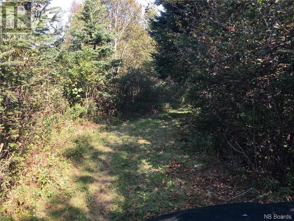 - Ashburn Road, Saint John, New Brunswick  E2K 5K7 - Photo 14 - NB064391