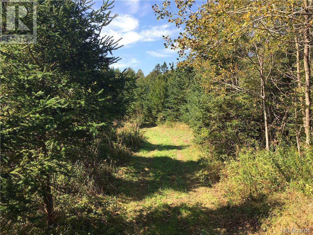 - Ashburn Road, Saint John, New Brunswick  E2K 5K7 - Photo 15 - NB064391