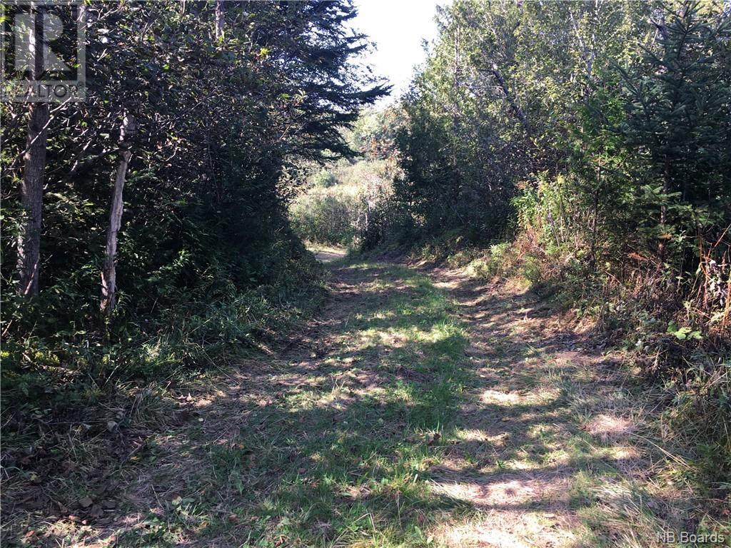 - Ashburn Road, Saint John, New Brunswick  E2K 5K7 - Photo 20 - NB064391