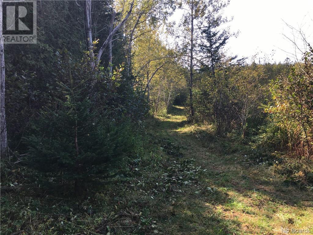 - Ashburn Road, Saint John, New Brunswick  E2K 5K7 - Photo 21 - NB064391