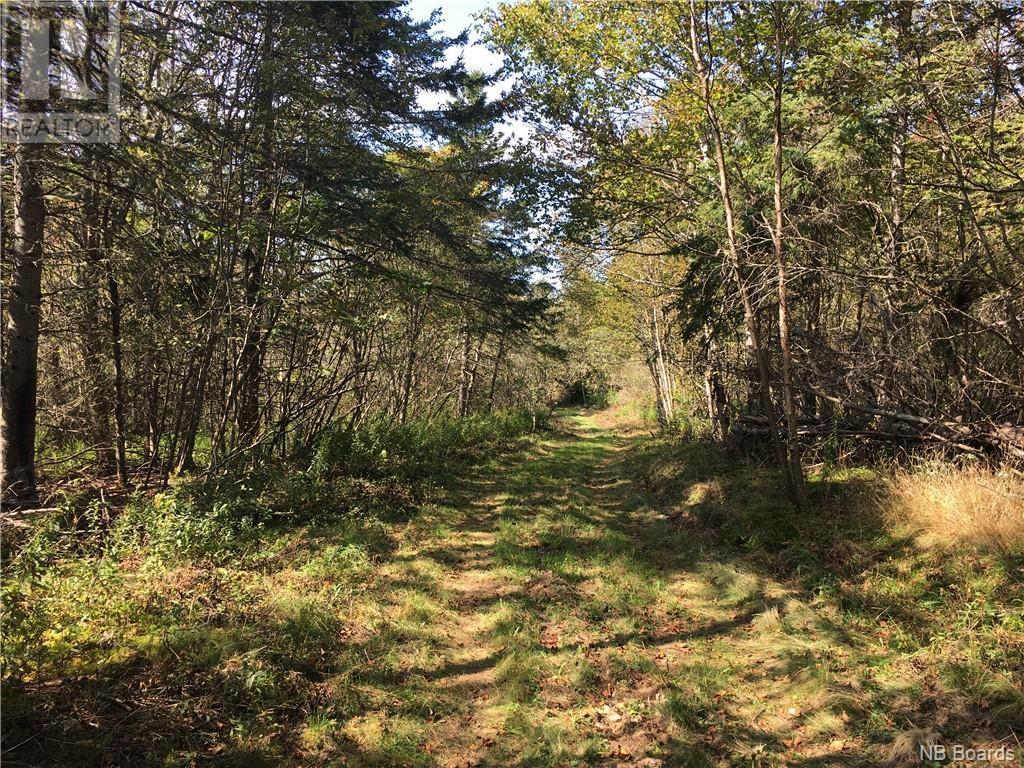 - Ashburn Road, Saint John, New Brunswick  E2K 5K7 - Photo 26 - NB064391